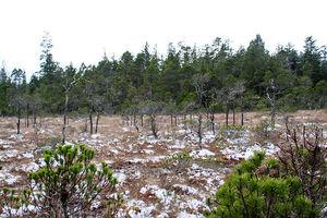 A warmer, wetter winter for Wrangell this season